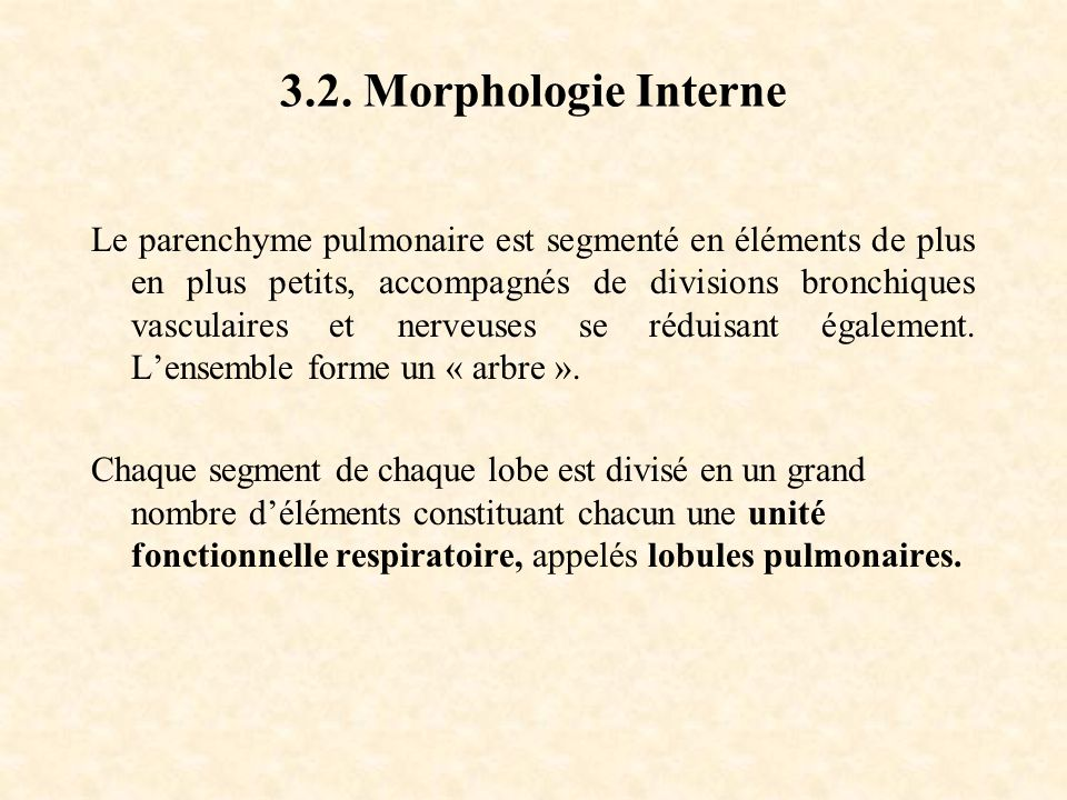 3.2. Morphologie Interne