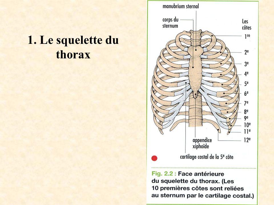 1. Le squelette du thorax