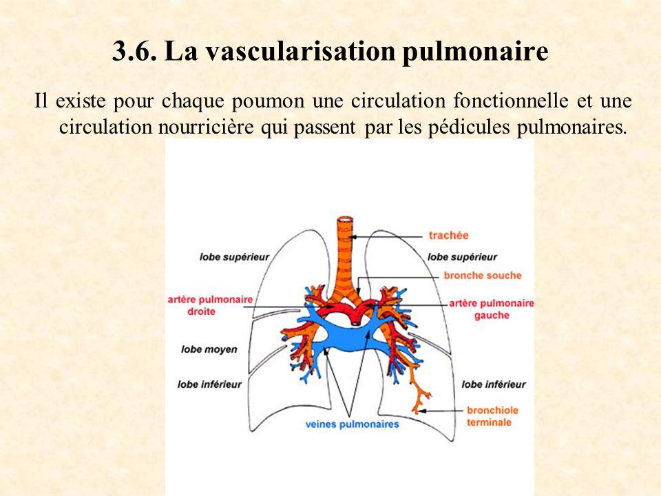 3.6. La vascularisation pulmonaire