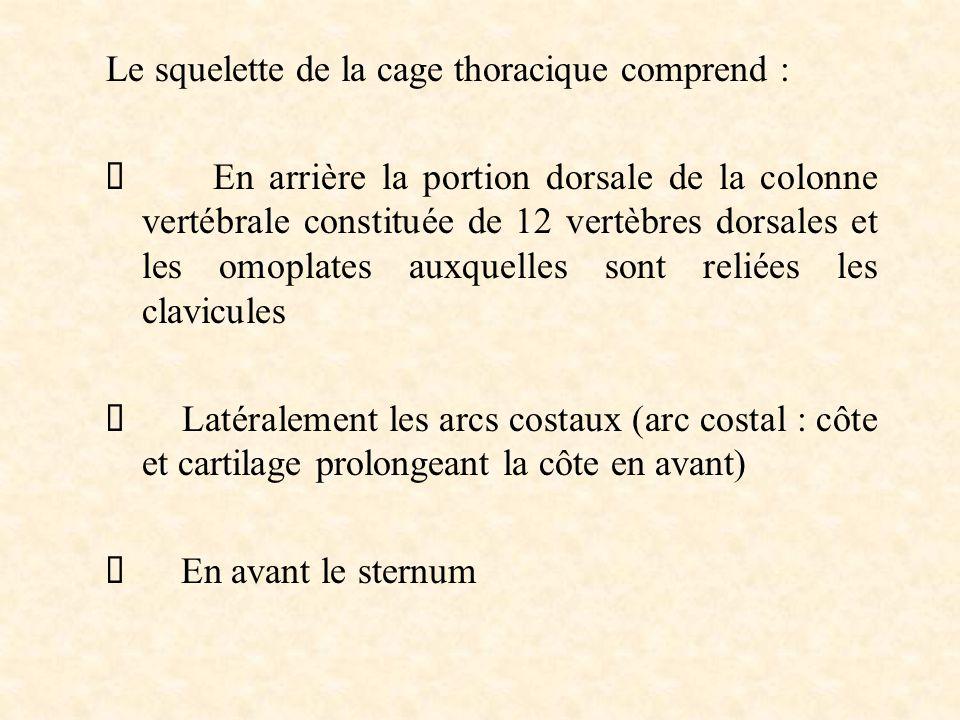 Le squelette de la cage thoracique comprend :