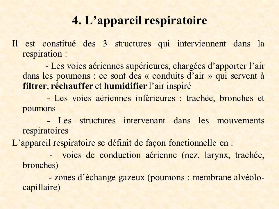 4. L'appareil respiratoire
