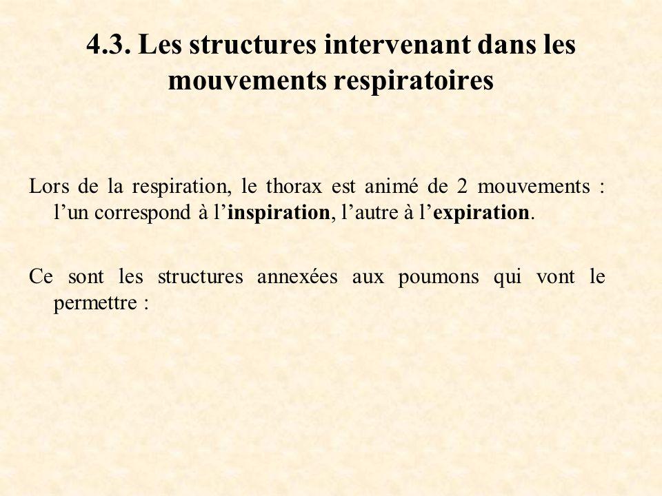 4.3. Les structures intervenant dans les mouvements respiratoires
