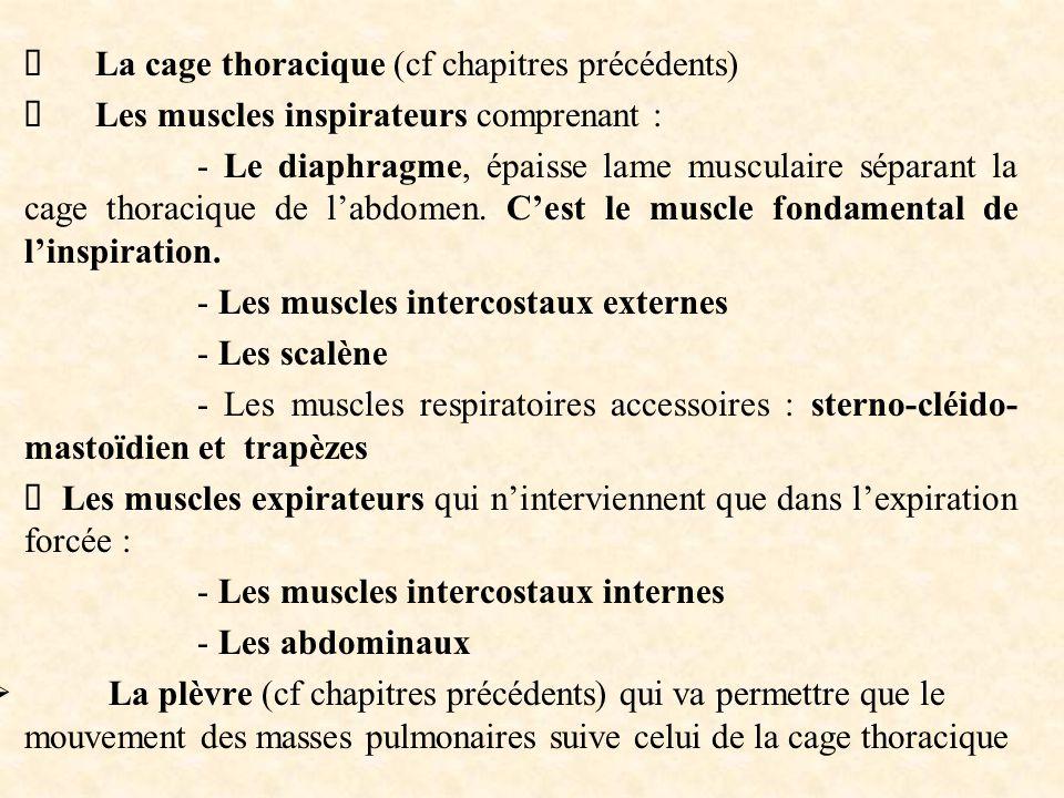 Ø La cage thoracique (cf chapitres précédents)