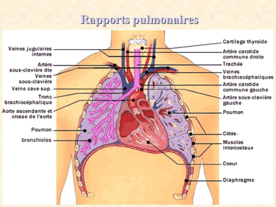 Rapports pulmonaires