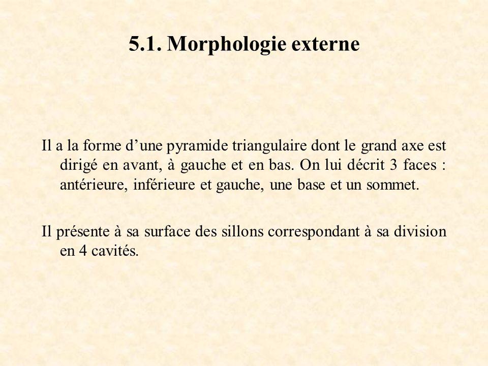 5.1. Morphologie externe
