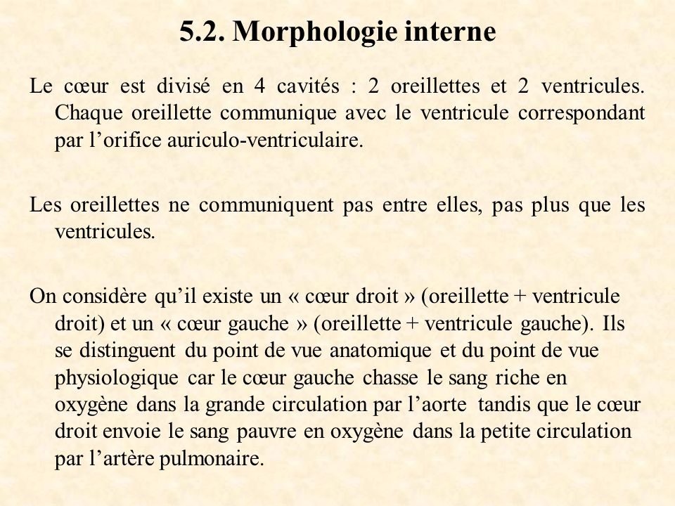 5.2. Morphologie interne