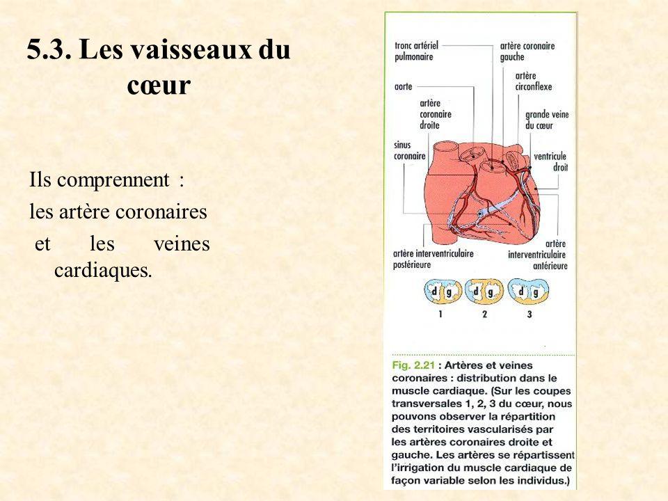5.3. Les vaisseaux du cœur Ils comprennent : les artère coronaires