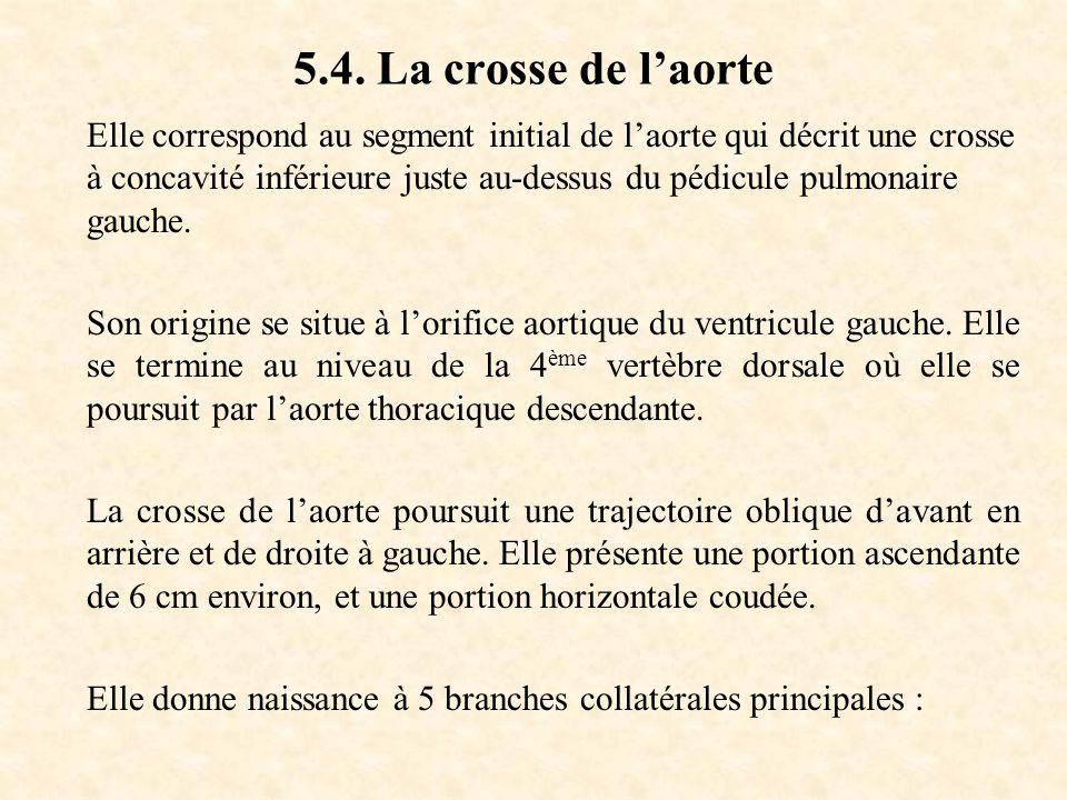 5.4. La crosse de l'aorte