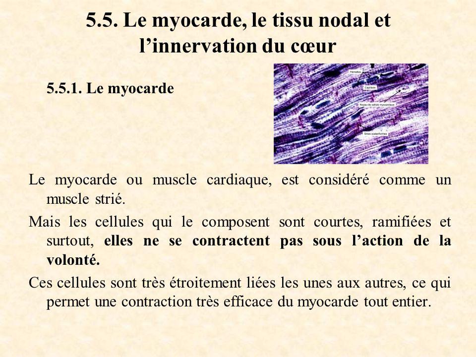 5.5. Le myocarde, le tissu nodal et l'innervation du cœur