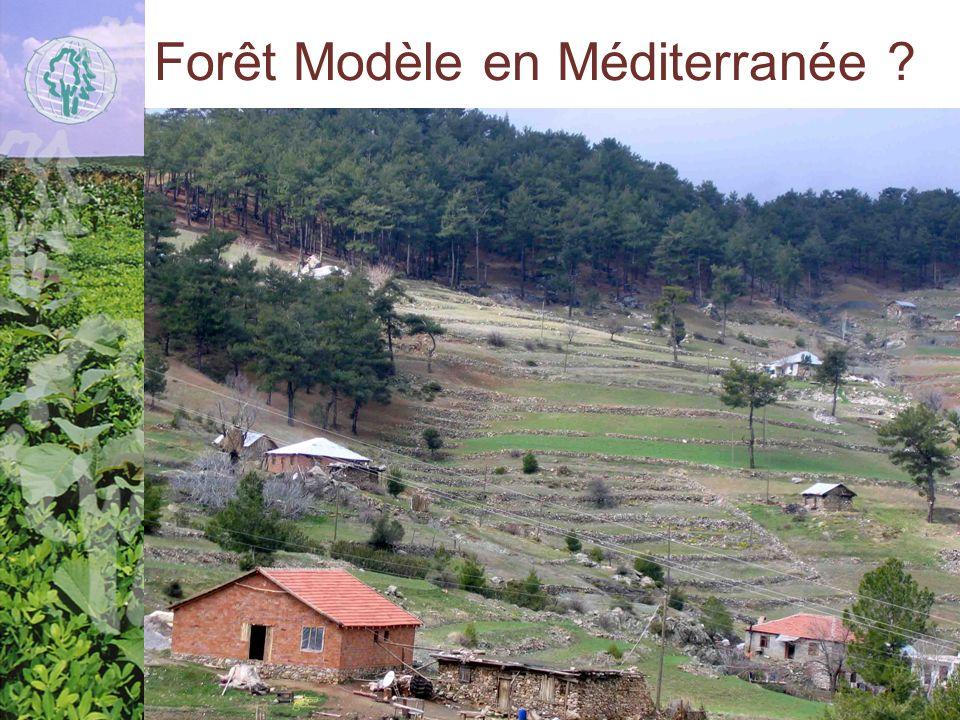 Forêt Modèle en Méditerranée