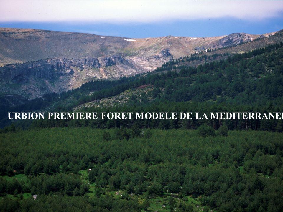 URBION PREMIERE FORET MODELE DE LA MEDITERRANEE