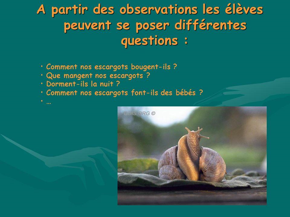A partir des observations les élèves peuvent se poser différentes questions :
