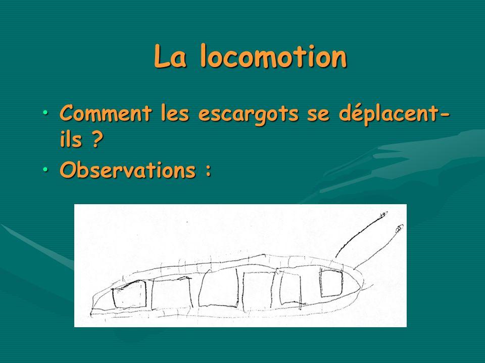 La locomotion Comment les escargots se déplacent-ils Observations :