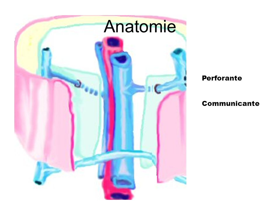 Anatomie Perforante Communicante