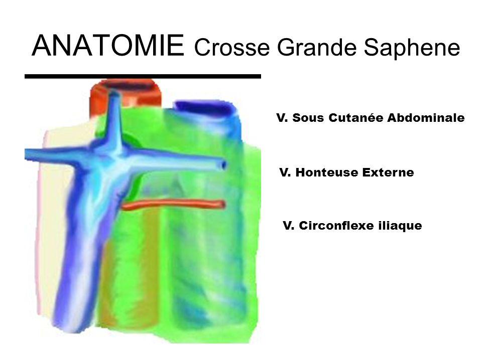 ANATOMIE Crosse Grande Saphene
