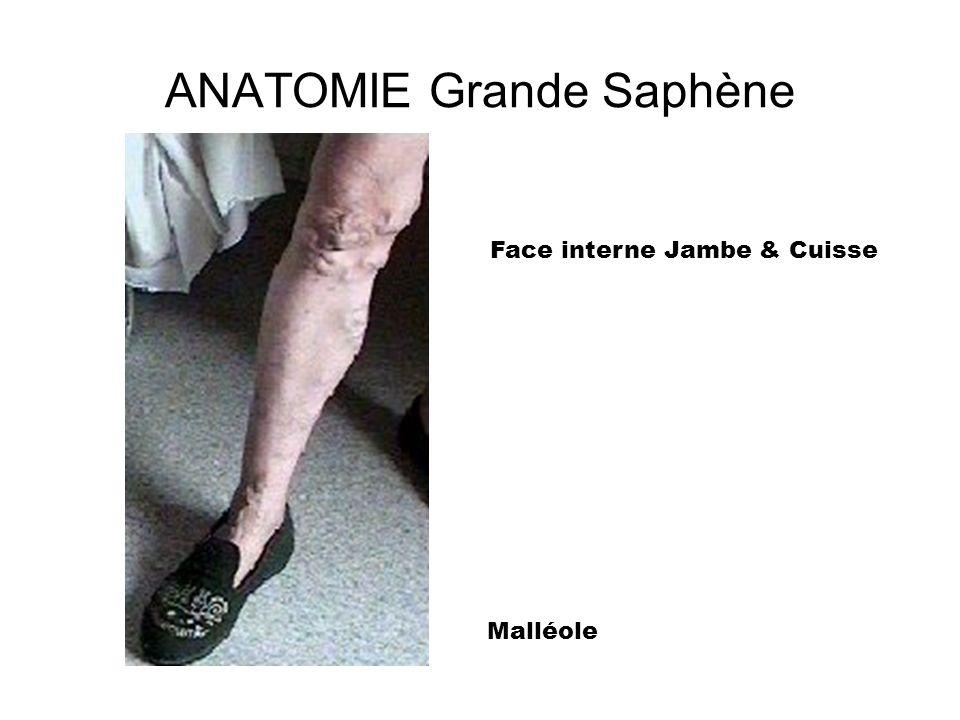 ANATOMIE Grande Saphène