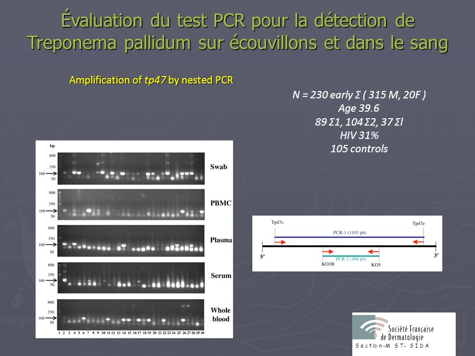 Amplification of tp47 by nested PCR