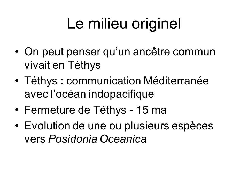 Le milieu originelOn peut penser qu'un ancêtre commun vivait en Téthys. Téthys : communication Méditerranée avec l'océan indopacifique.