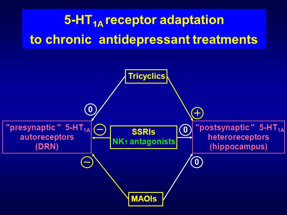 5-HT1A receptor adaptation to chronic antidepressant treatments