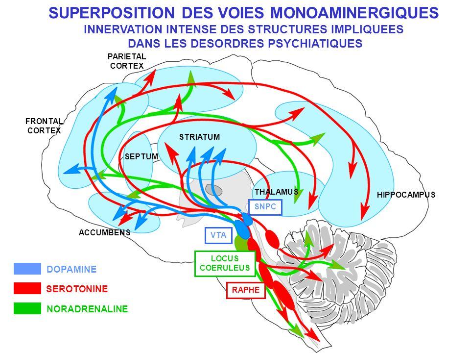 SUPERPOSITION DES VOIES MONOAMINERGIQUES