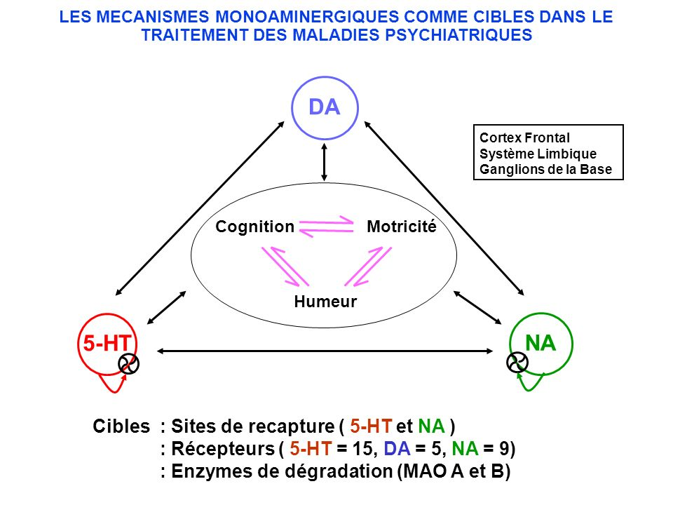 DA 5-HT NA Cibles : Sites de recapture ( 5-HT et NA )