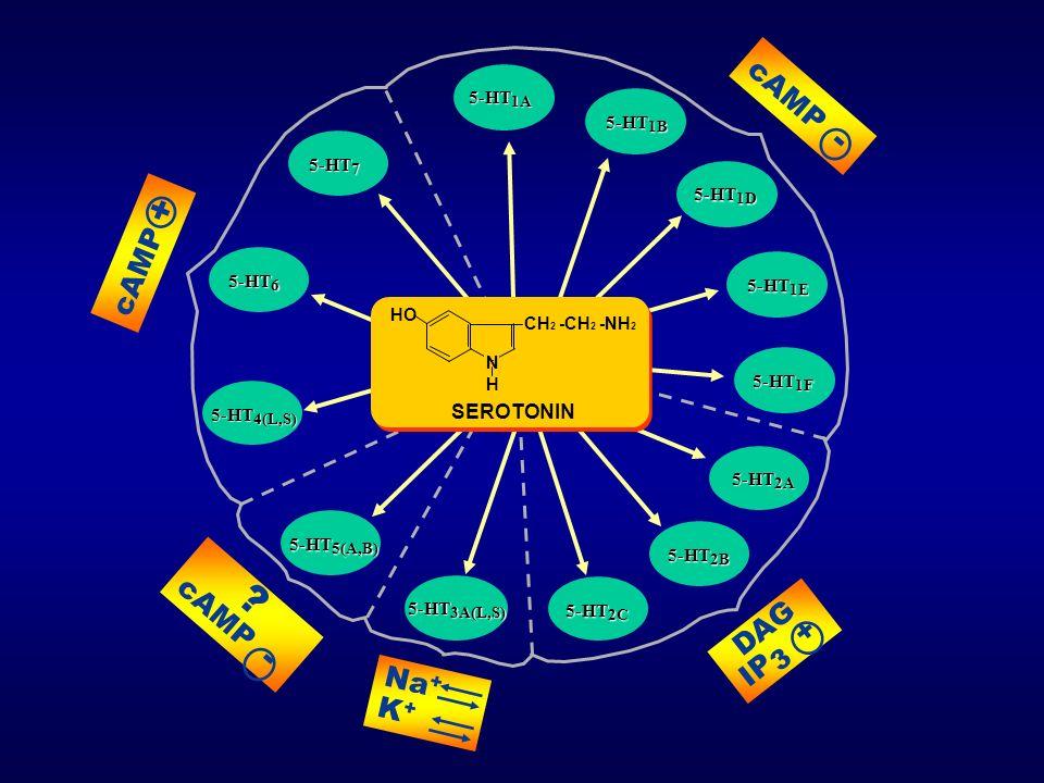 cAMP - cAMP + cAMP - DAG IP3 + Na+ K+ SEROTONIN 5-HT1A 5-HT1B 5-HT7