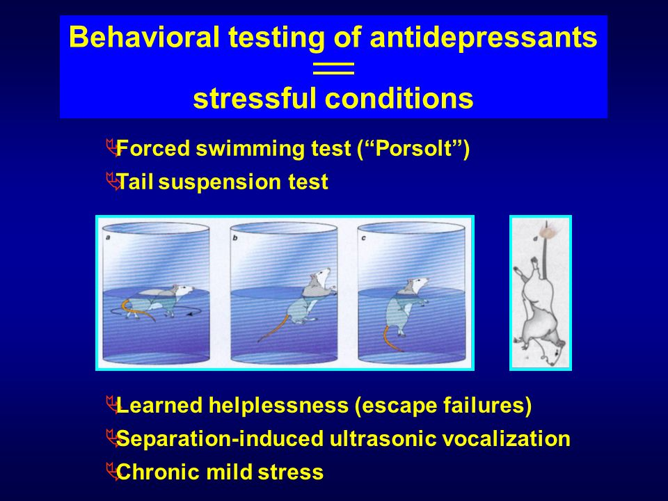 Behavioral testing of antidepressants