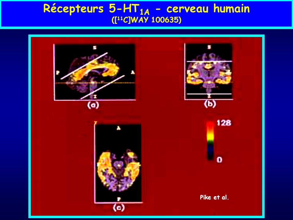 Récepteurs 5-HT1A - cerveau humain