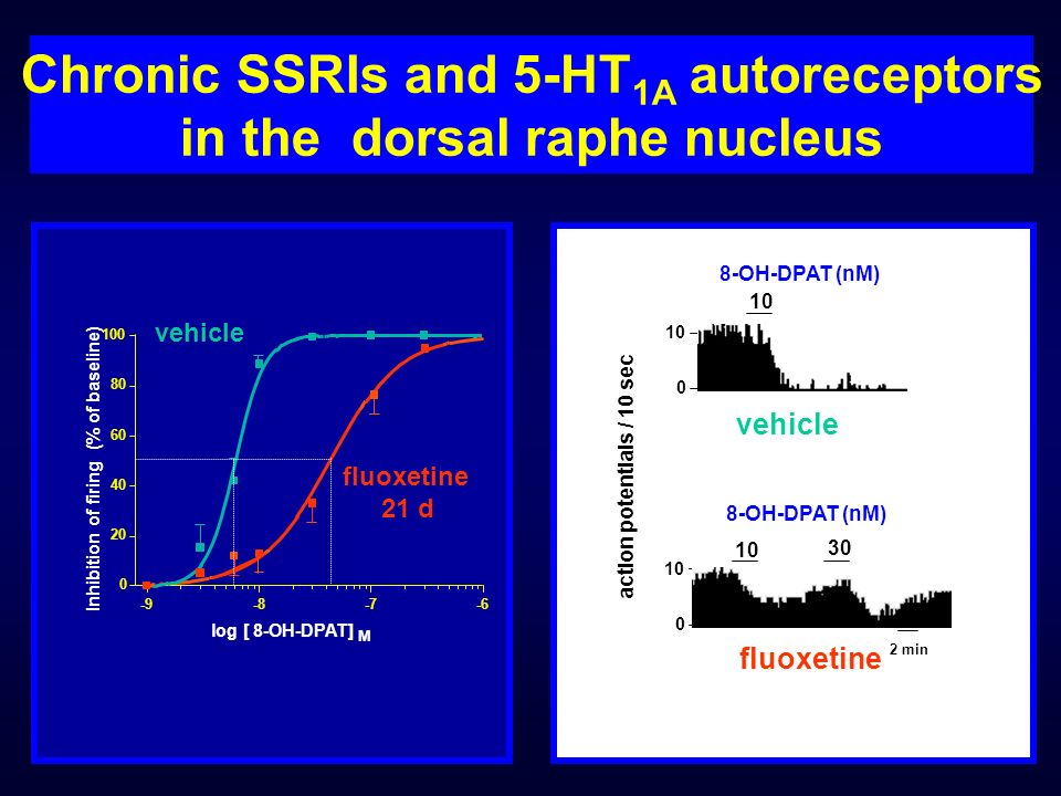 Chronic SSRIs and 5-HT1A autoreceptors in the dorsal raphe nucleus