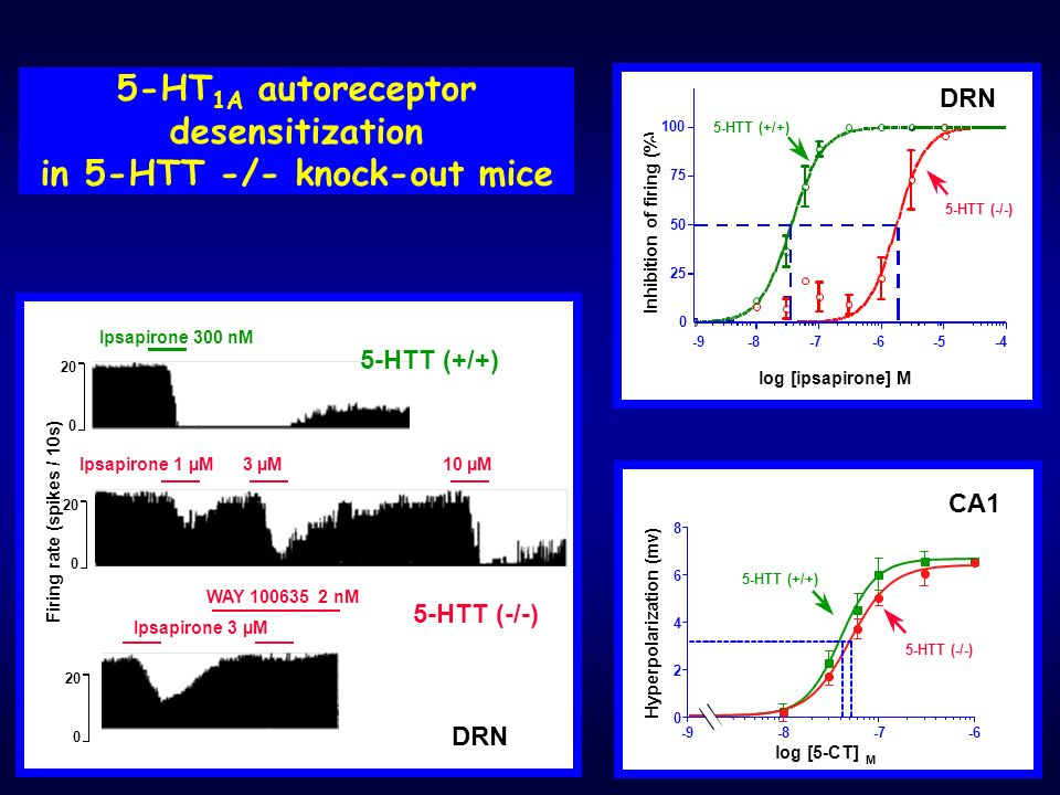 5-HT1A autoreceptor desensitization in 5-HTT -/- knock-out mice