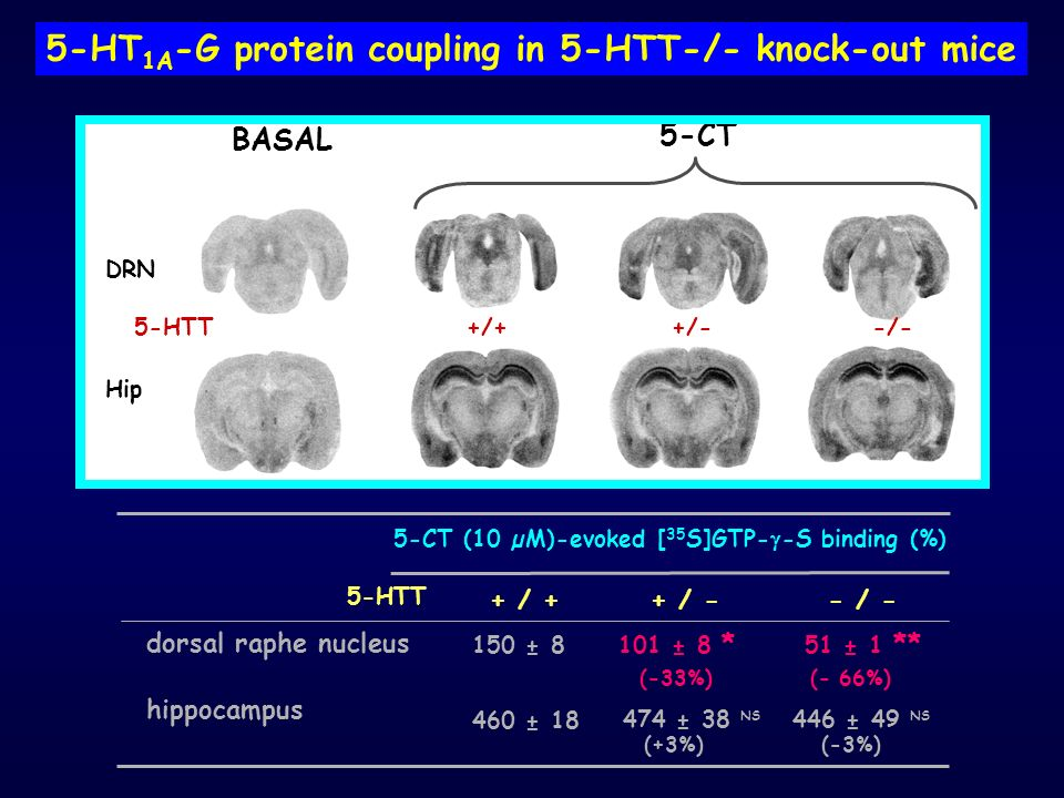 5-HT1A-G protein coupling in 5-HTT-/- knock-out mice