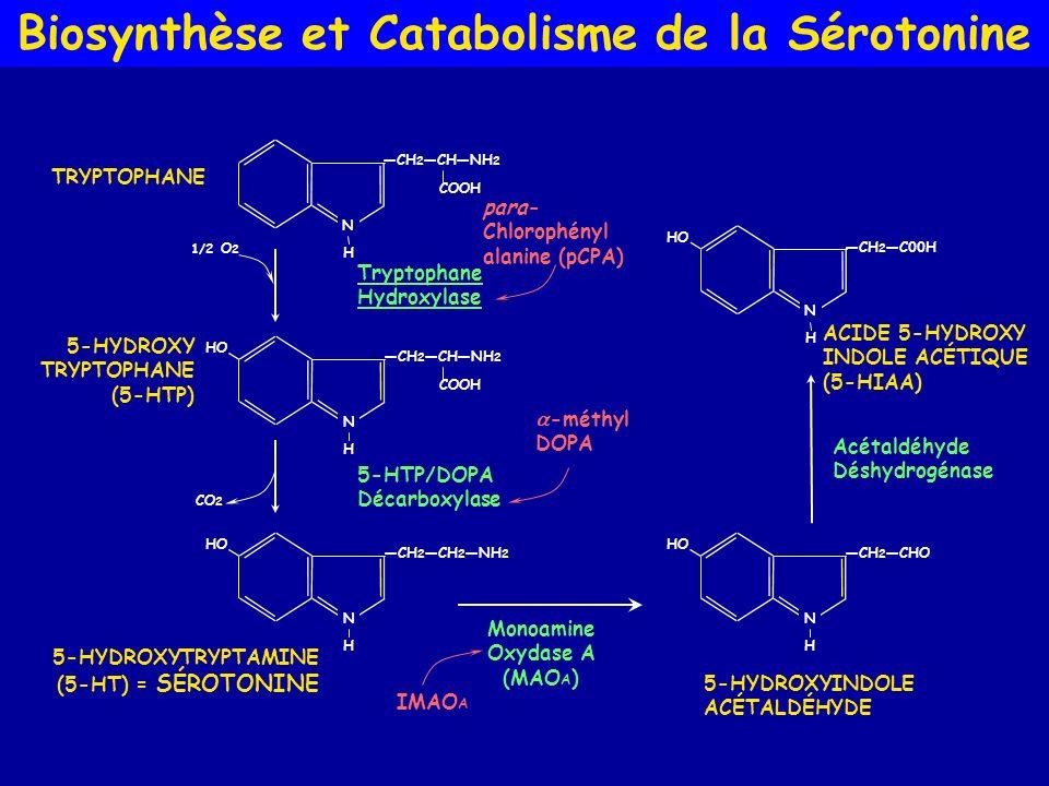 Biosynthèse et Catabolisme de la Sérotonine