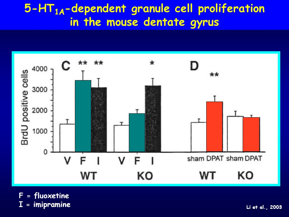 5-HT1A-dependent granule cell proliferation in the mouse dentate gyrus