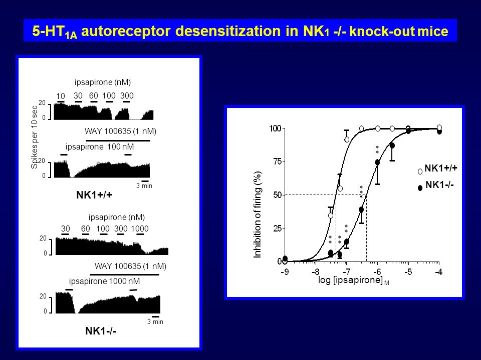5-HT1A autoreceptor desensitization in NK1 -/- knock-out mice