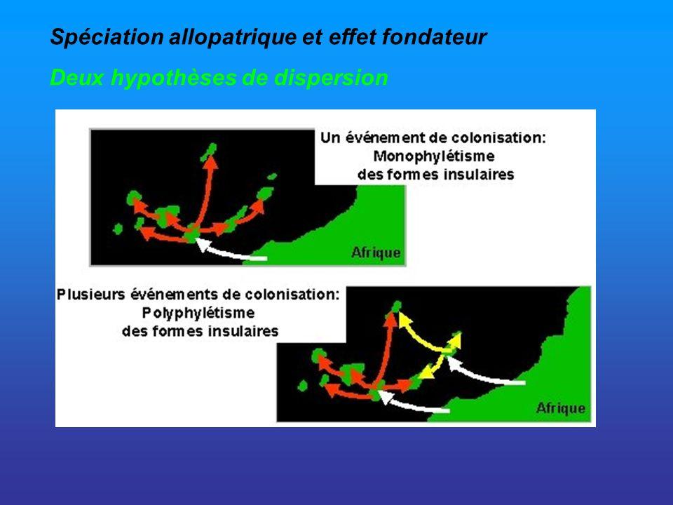 Spéciation allopatrique et effet fondateur