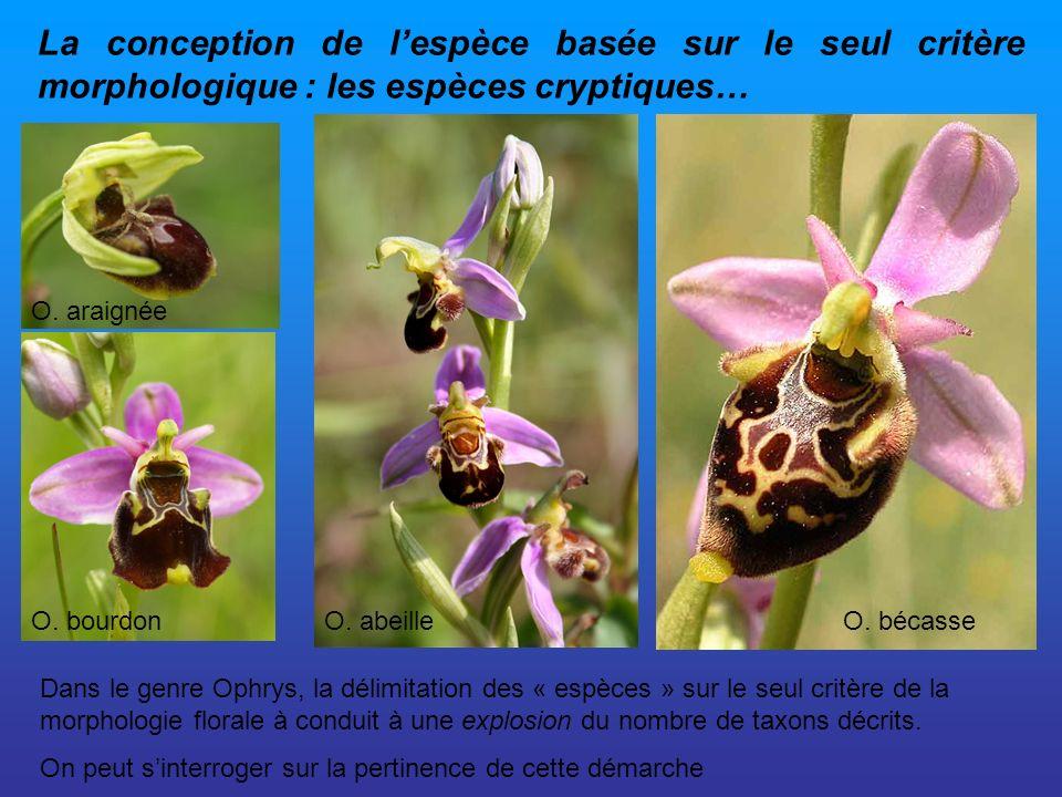 La conception de l'espèce basée sur le seul critère morphologique : les espèces cryptiques…