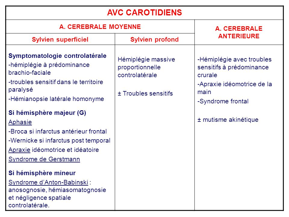 A. CEREBRALE ANTERIEURE