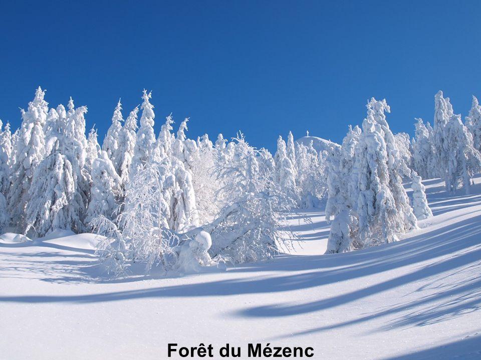 Forêt du Mézenc