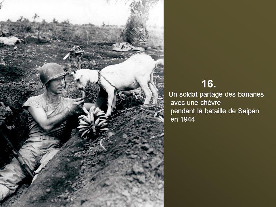 16. Un soldat partage des bananes avec une chèvre pendant la bataille de Saipan en 1944