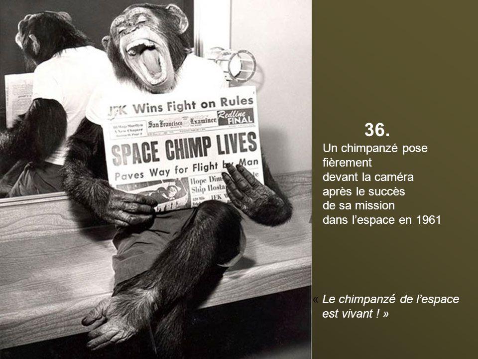 36. Un chimpanzé pose fièrement devant la caméra après le succès
