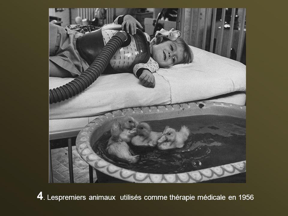 4. Lespremiers animaux utilisés comme thérapie médicale en 1956