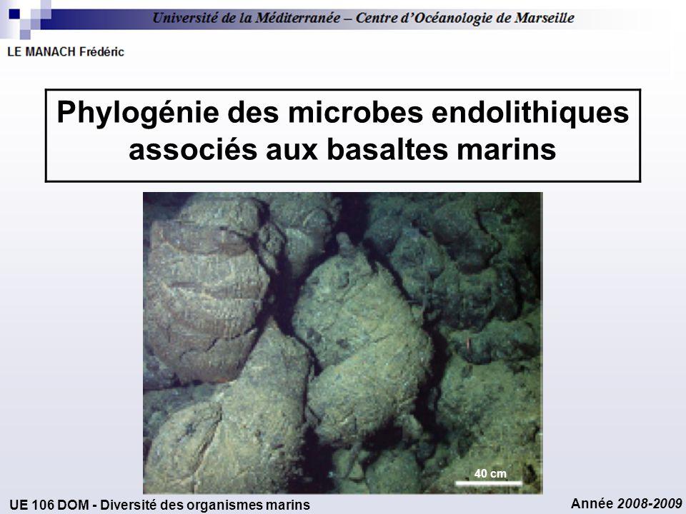 Phylogénie des microbes endolithiques associés aux basaltes marins