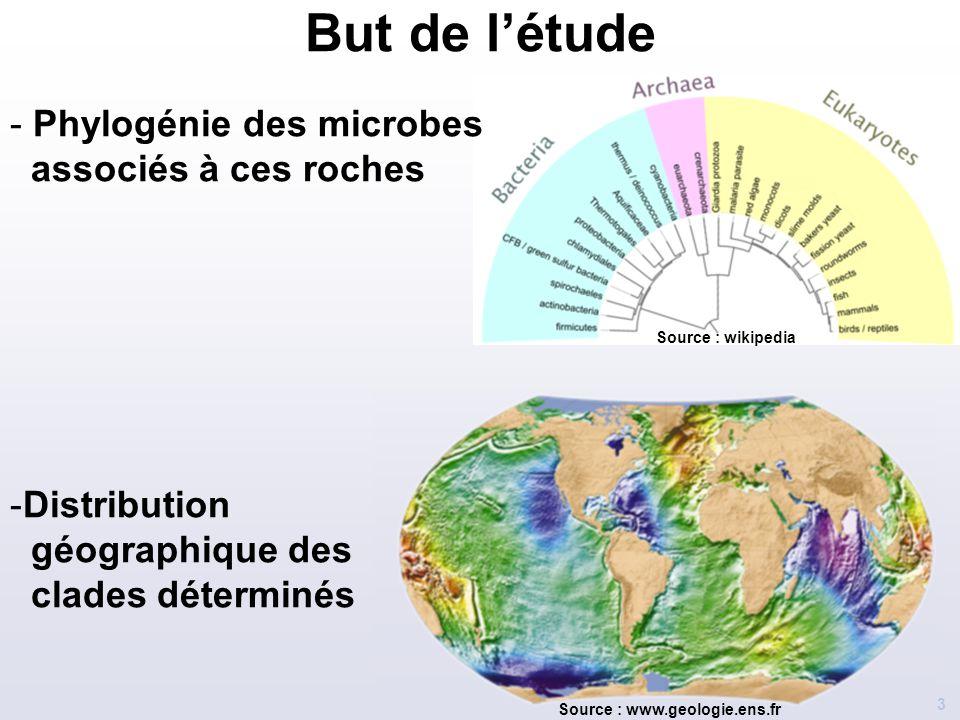 But de l'étude Phylogénie des microbes associés à ces roches