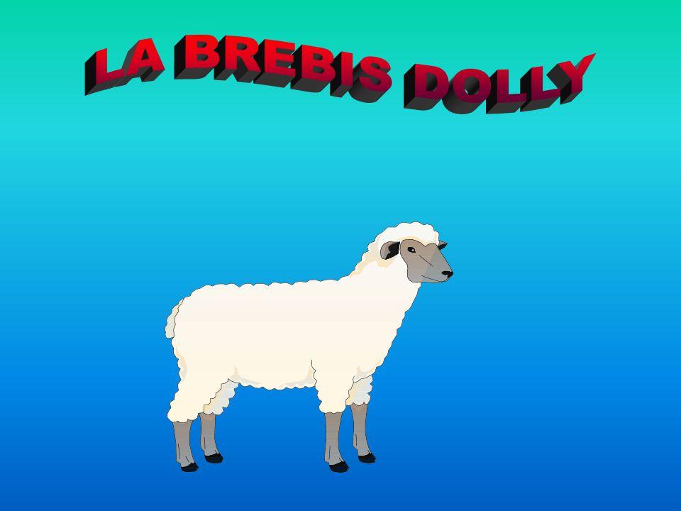 LA BREBIS DOLLY