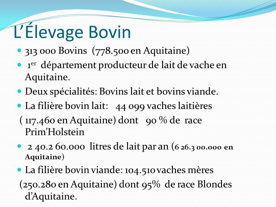 L'Élevage Bovin 313 000 Bovins (778.500 en Aquitaine)