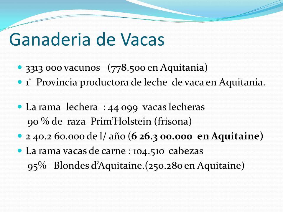 Ganaderia de Vacas 3313 000 vacunos (778.500 en Aquitania)
