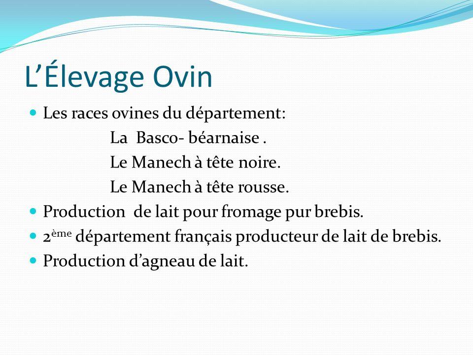 L'Élevage Ovin Les races ovines du département: La Basco- béarnaise .