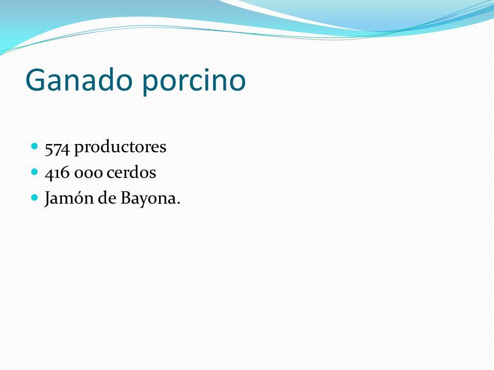 Ganado porcino 574 productores 416 000 cerdos Jamón de Bayona.