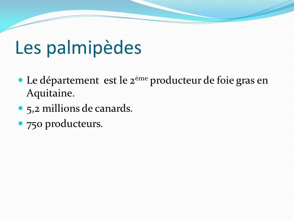 Les palmipèdes Le département est le 2ème producteur de foie gras en Aquitaine. 5,2 millions de canards.