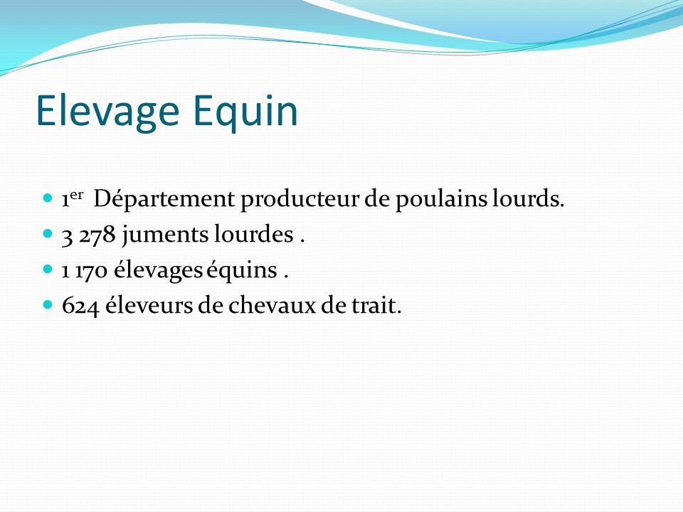 Elevage Equin 1er Département producteur de poulains lourds.